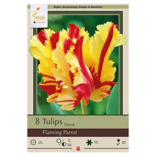 Tulip 'Flaming Parrot'