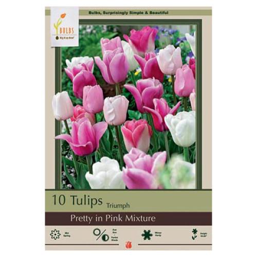 Tulip 'Pretty in Pink Mixture'