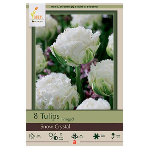 Tulip 'Snow Crystal'