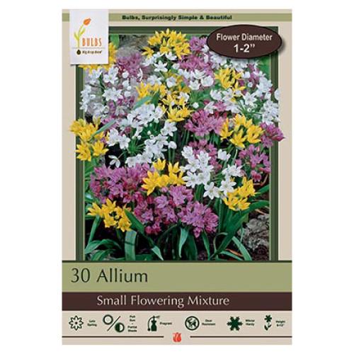 Allium 'Small Flowering Mixture'