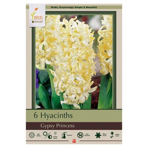Hyacinth orientalis 'Gypsy Princess'