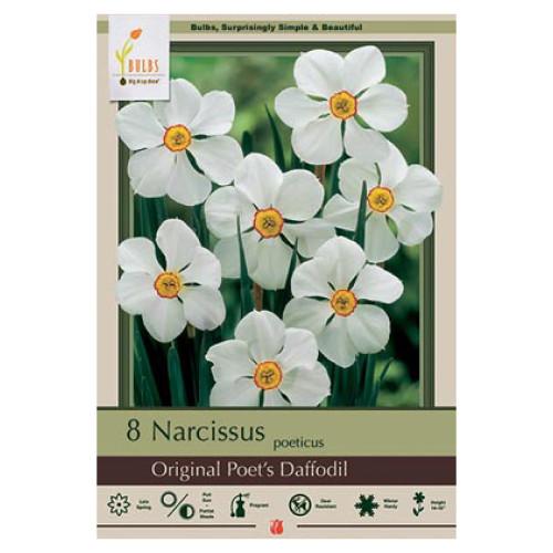 Narcissus 'Original Poet's Daffodil'
