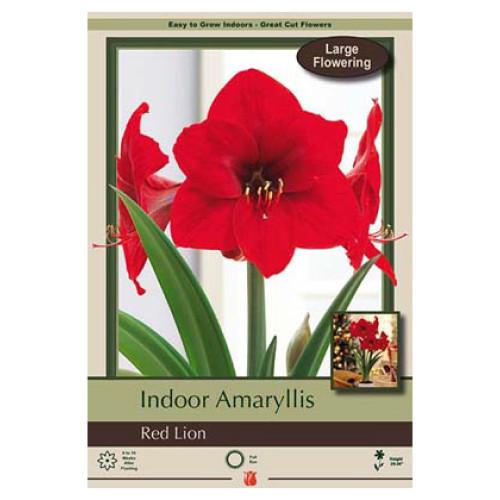 Amaryllis 'Red Lion'