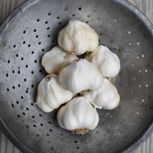 Seed Garlic - Silver White