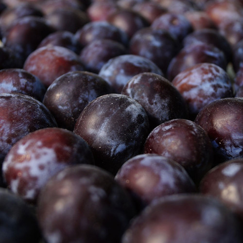Prunus x 'Black Ice'