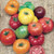 Heirloom Rainbow Blend Tomato