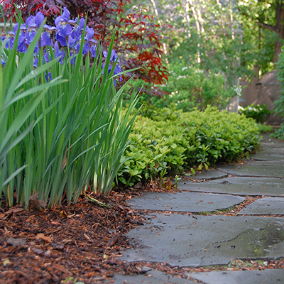 Mulched garden and stone path