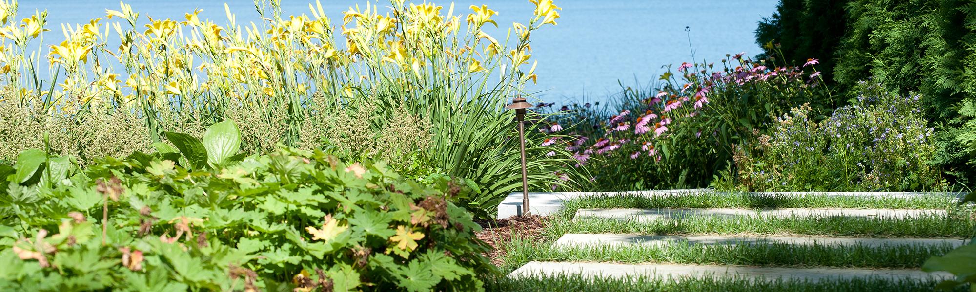 Yellow dayliles echinacea and stone steps