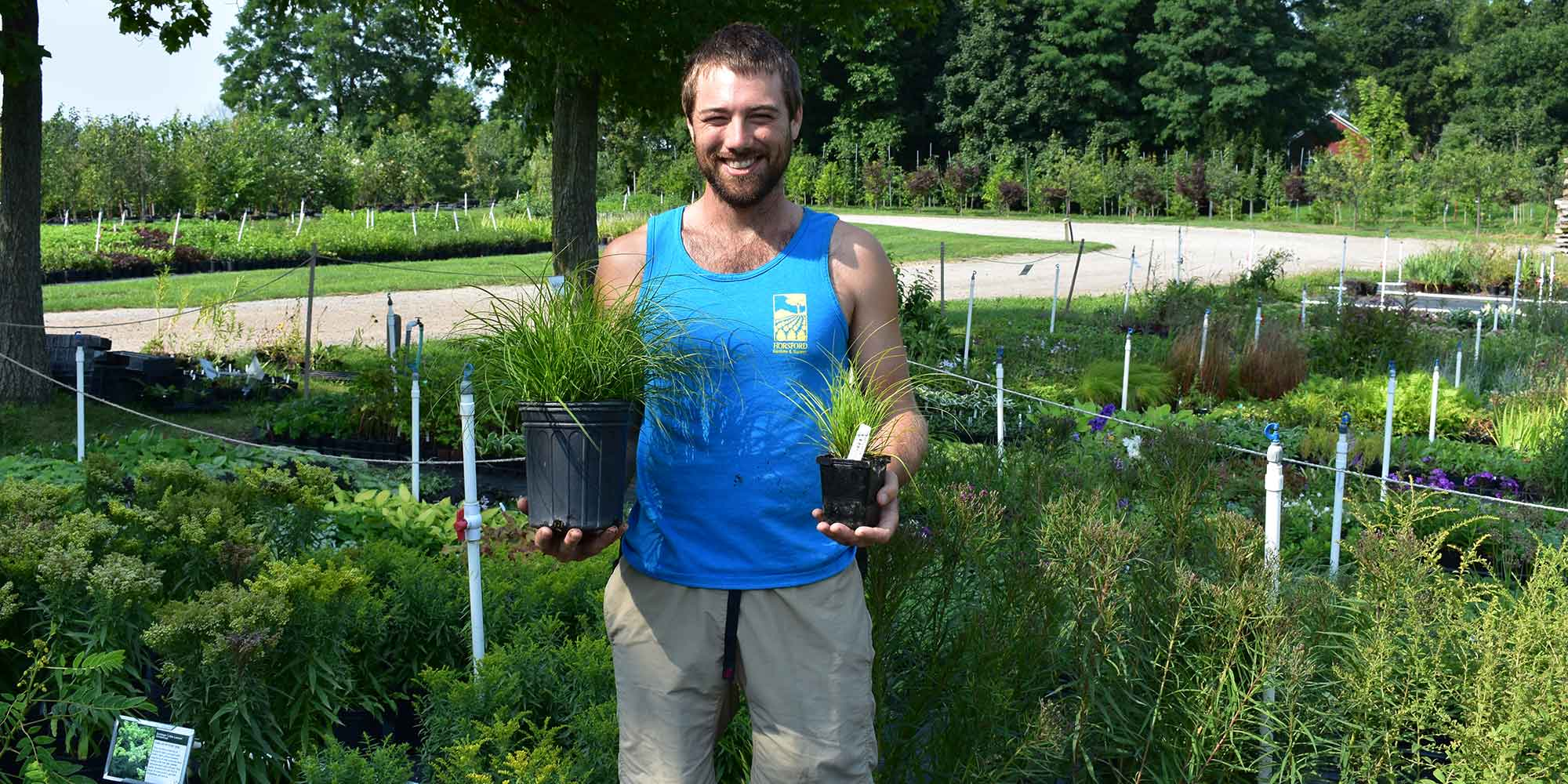 Team member with perennial grasses in two sizes