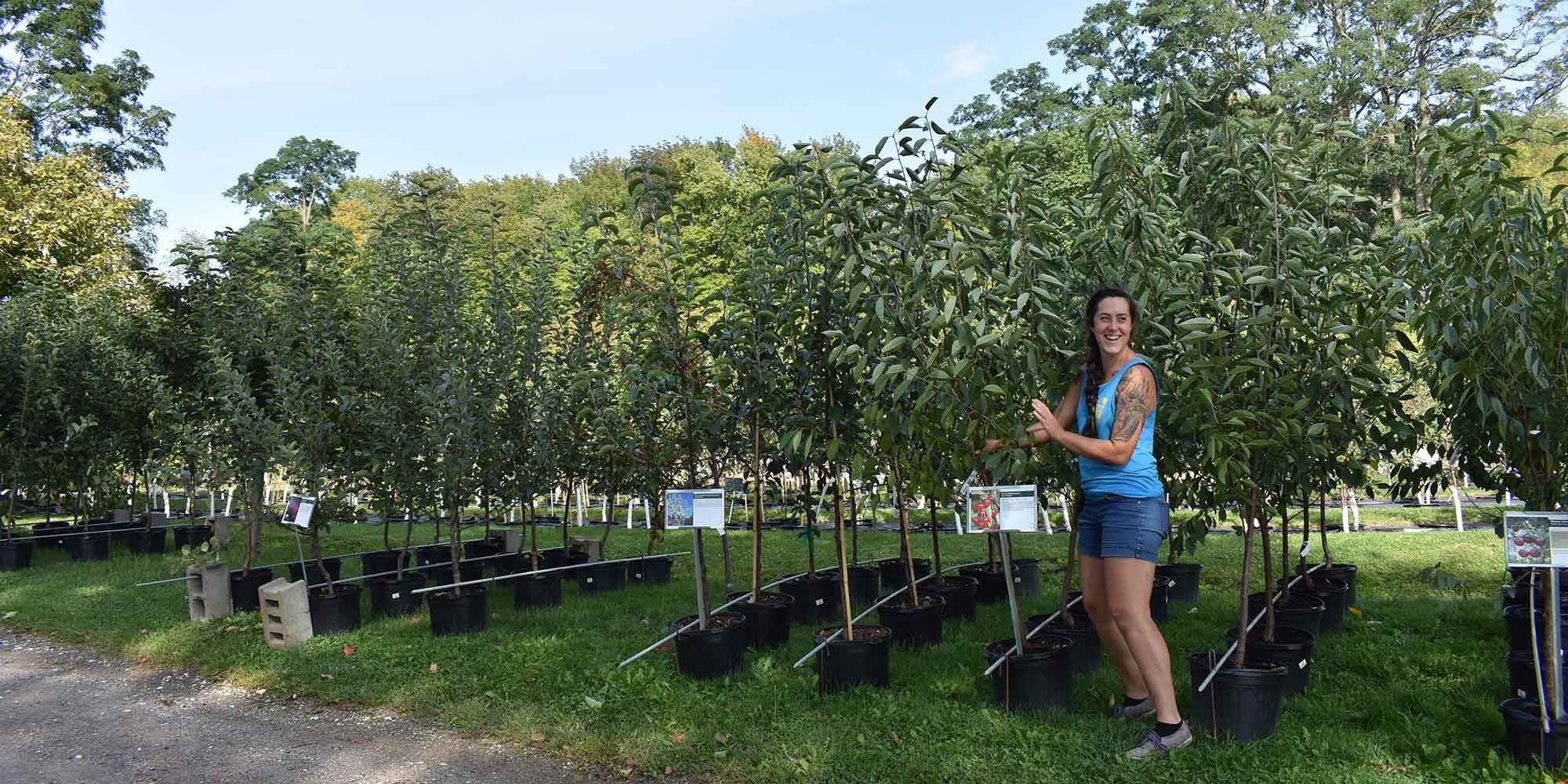 Team member with fruit trees in 7-gallon containers