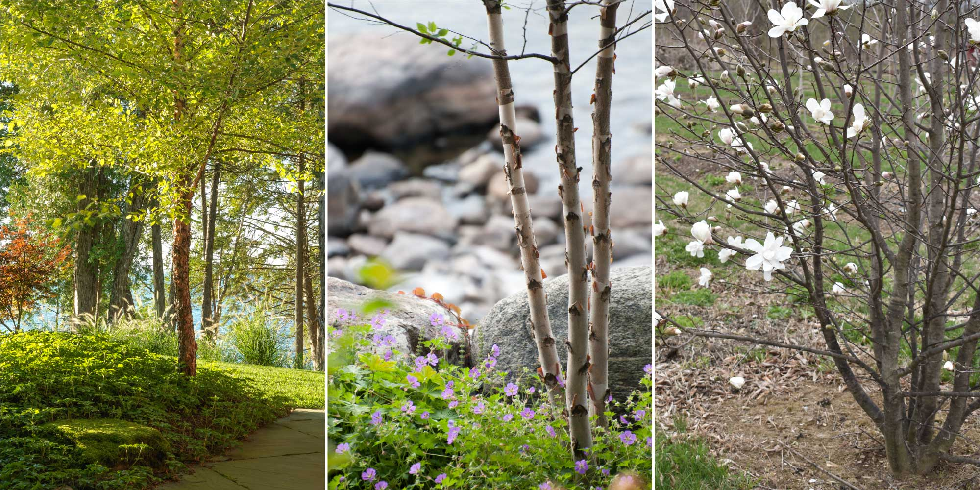 Examples of single stem clump and multistem trees