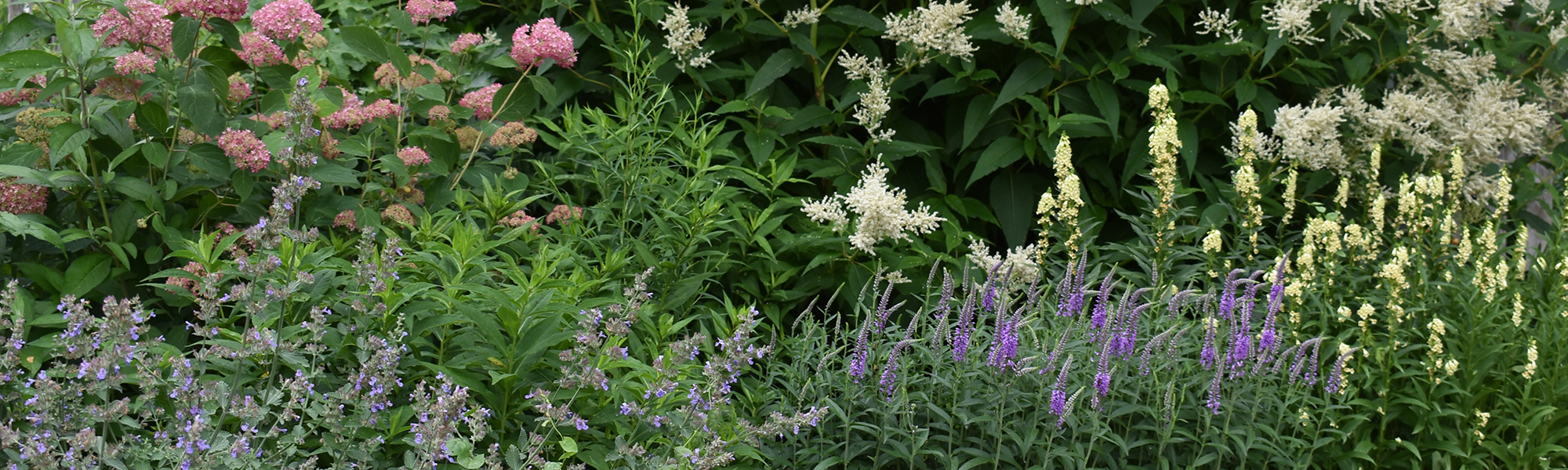 Pink purple white and yellow perennial and shrub flowers