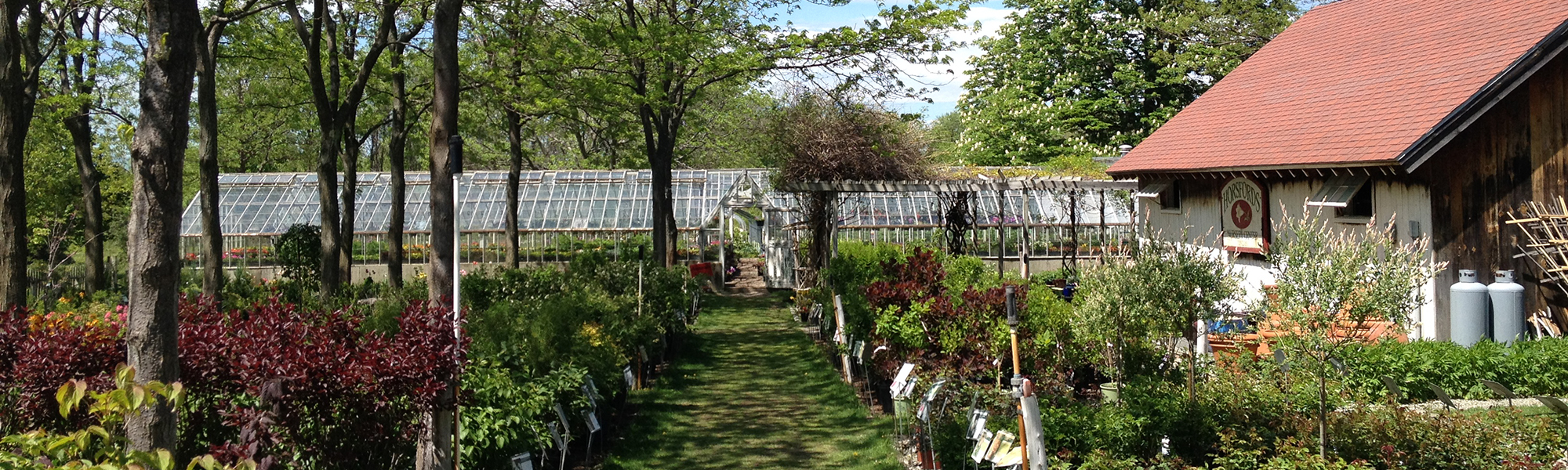 Horsfords outdoor Garden Center and glass greenhouses