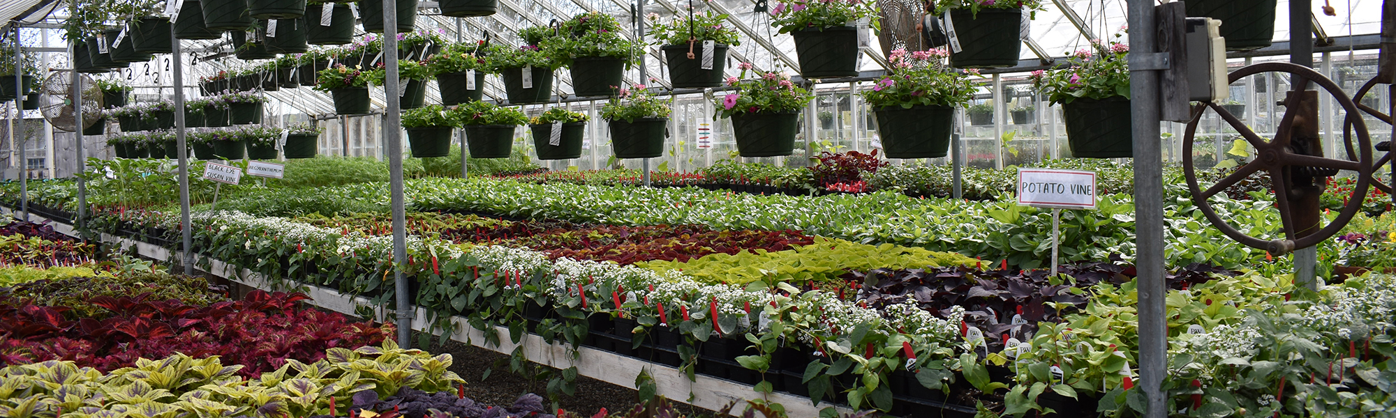 View inside glass greenhouses in spring