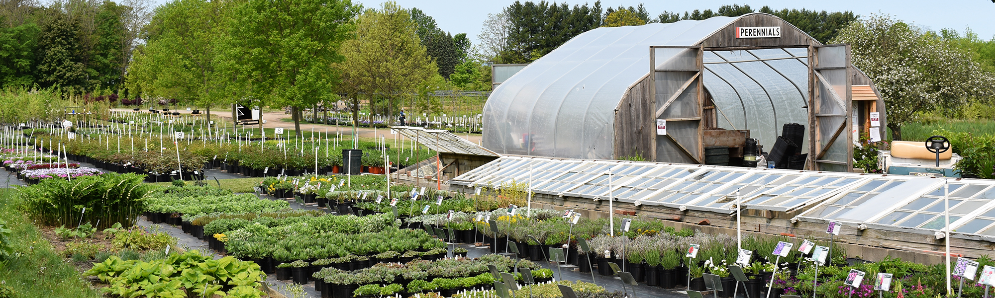 Perennials shopping area and hoop house