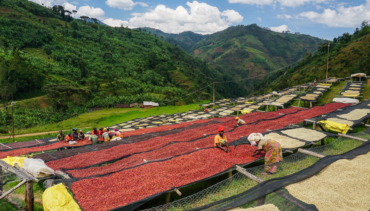 Coffee farm drying beds in Burundi