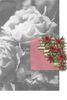South Of France Bar Soap - Climbing Wild Rose - Full Size - 6 oz
