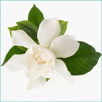 Uncommon Scents Tropical Gardenia Perfume Essence - 1 oz roll-top