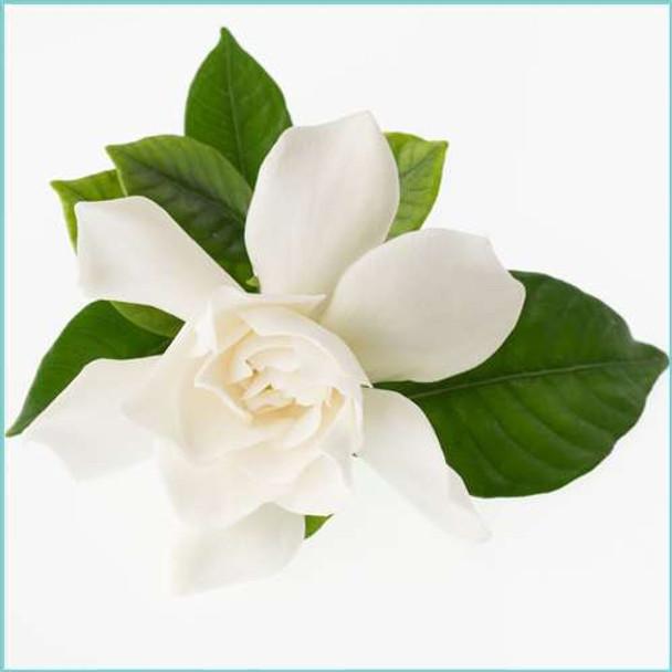 Uncommon Scents Tropical Gardenia Perfume Essence - 1/3 oz roll-top