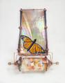 Petite Papillion