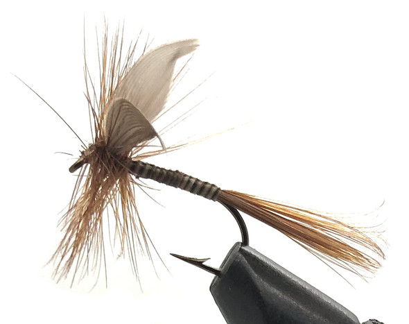 10 Flies -  Dry Ginger Quill on a Bronze 8 Mustad Hook