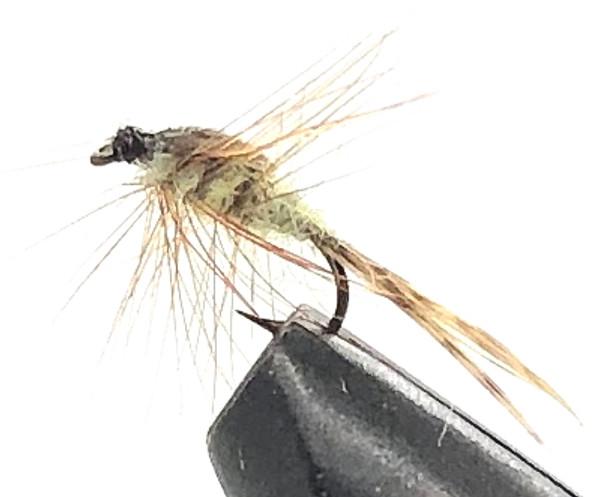 10 Flies -  Nymph Blue Quill on a Bronze 14 Mustad Hook