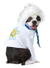 Al-Bark Einstein Dog Costume back