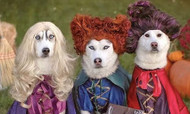 11 Delightful Dog and Pet Costumes Ideas