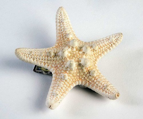 Mermaid Star Hair Clip