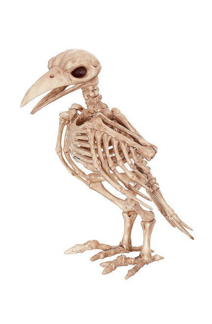 Skeleton Raven Decor
