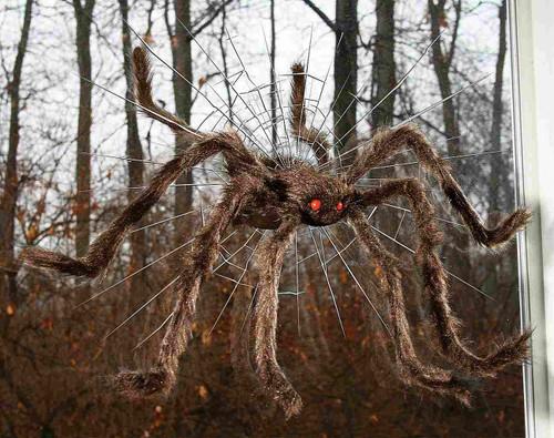 """Spider Crasher Brown 30"""""""