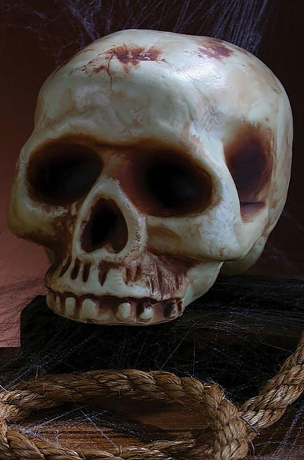 Skull Jawless Home Decor