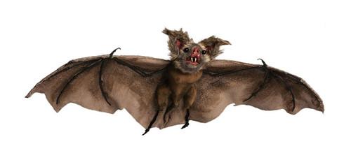 "Realistic Bat Halloween Decoration 35"""