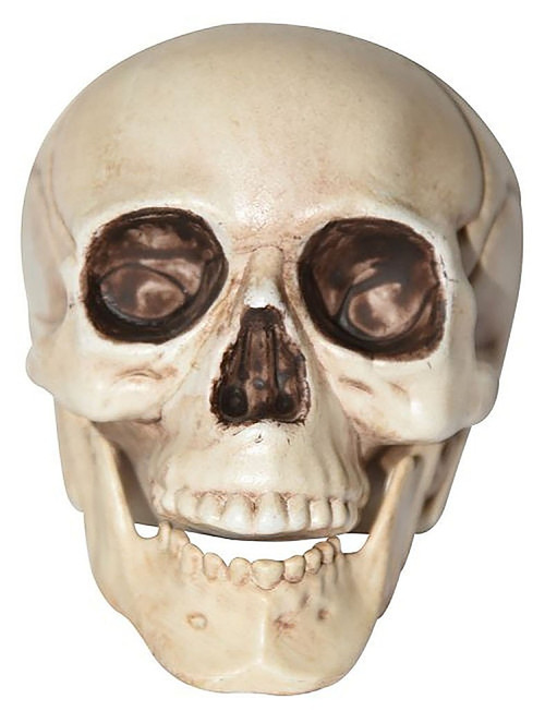Realistic Skull Halloween Decoration