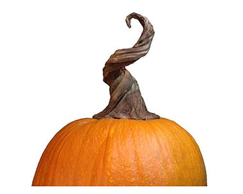 Pumpkin Vine Stem