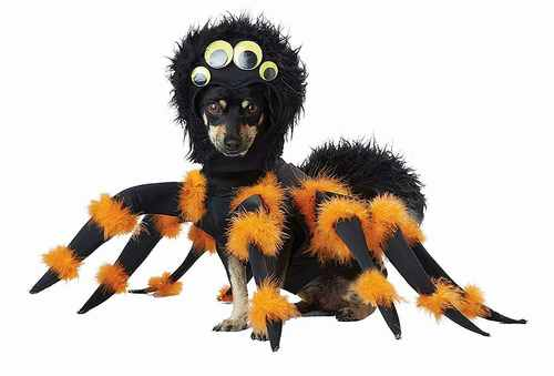 Spider Pup Dog Costume