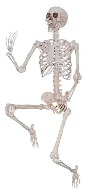 Posable Skeleton 60in