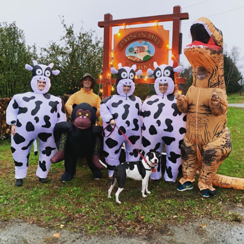 Inflatable Costumes of Cow, T-Rex and Ape on Farm