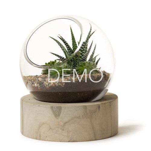Orbit Terrarium - Large