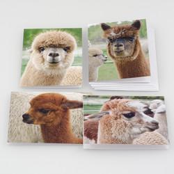 Alpaca Note Card Set at  The Loopy Ewe