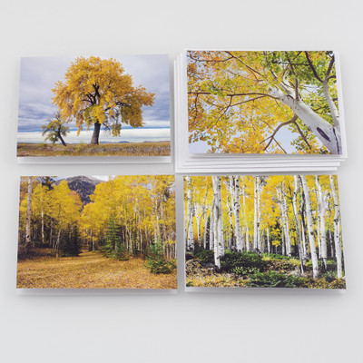 Colorado Fall Note Card Set
