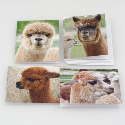 Alpaca Note Card Set