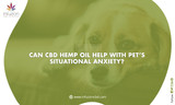 How to Cure Lymphoma in Pets Using Hemp Oil?