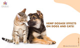 Hemp Dosage Effects on Dogs And Cats