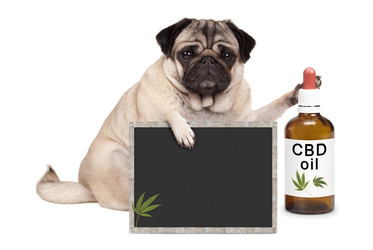 How Does CBD Works For Dogs?