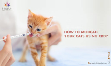 How to Treat Your Cats' Anxiety Using CBD?