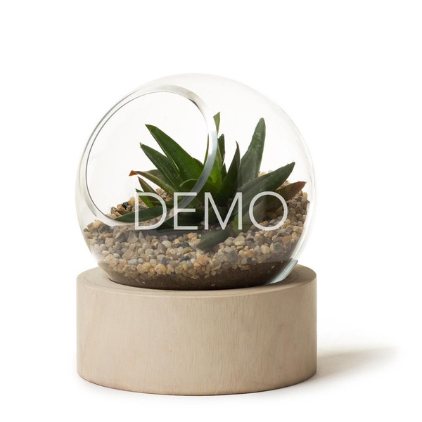 Orbit Terrarium - Small