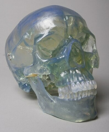 Life-size Clear Skull