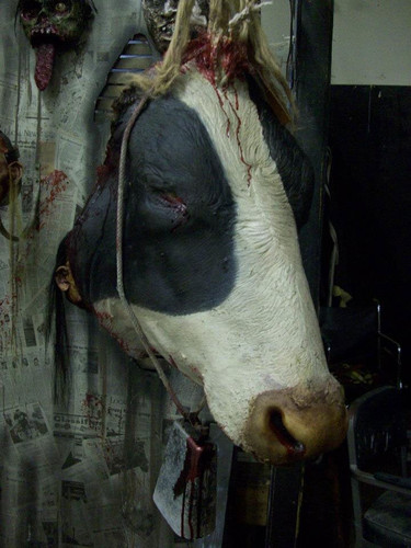SEVERED FULL SIZE COW HEAD