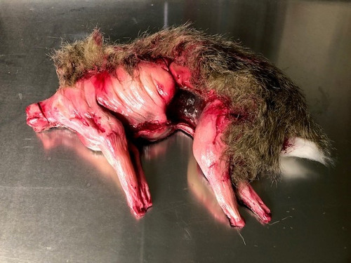 Skinned Rabbit With Fur